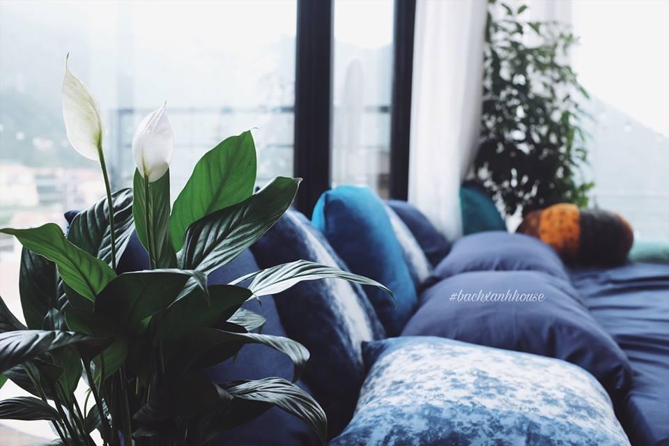 Hệ thống homestay đều do anh chị tự tay thiết kế, kể cả các chi tiết lớn nhỏ trong nhà đều do anh chị lựa chọn và set up. Từng cây hoa, ngọn cỏ trong vườn cũng do một tay vợ chồng anh chị chăm sóc tỉ mẩn.
