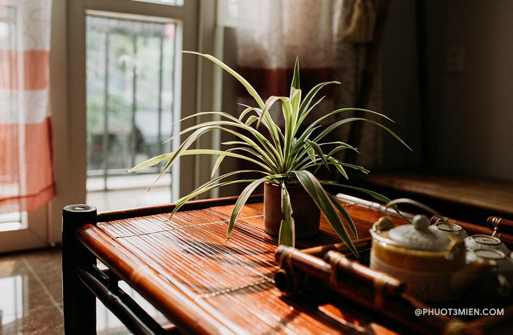 bamboo homestay huế