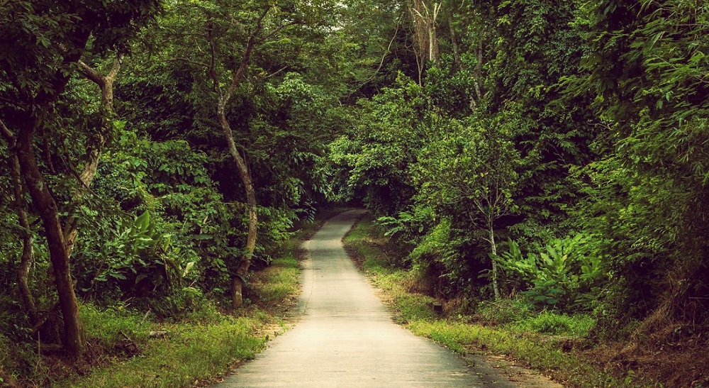 khu rừng cúc phương
