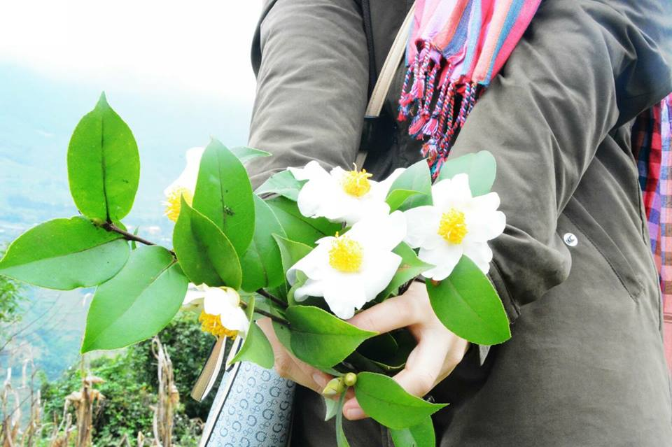 Du lịch Bình Liêu mùa hoa sở
