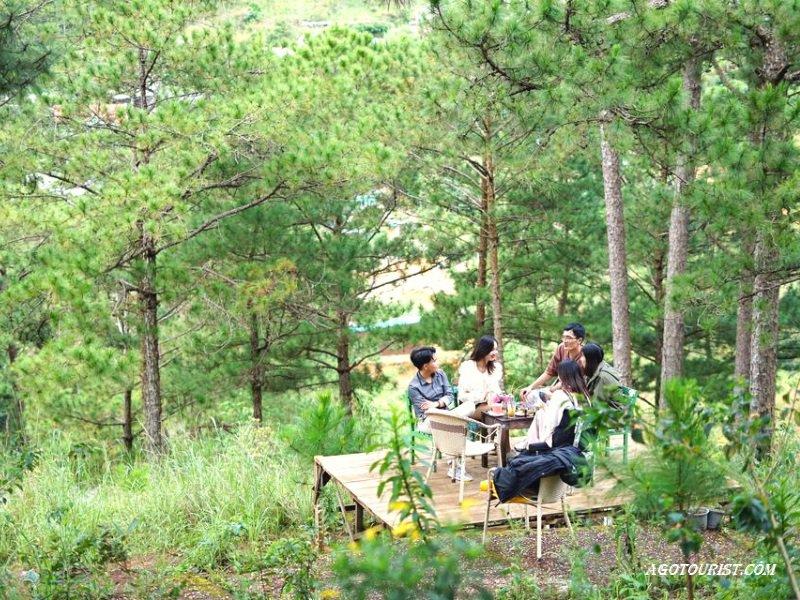 View ngắm rừng thông tại homestay Moonrise Garden Đà Lạt